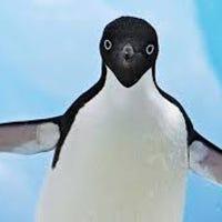 penguin1221