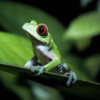 hopkingreenfrog