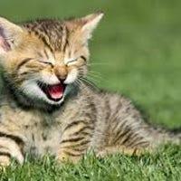 kitteneye