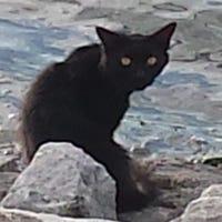 baycat