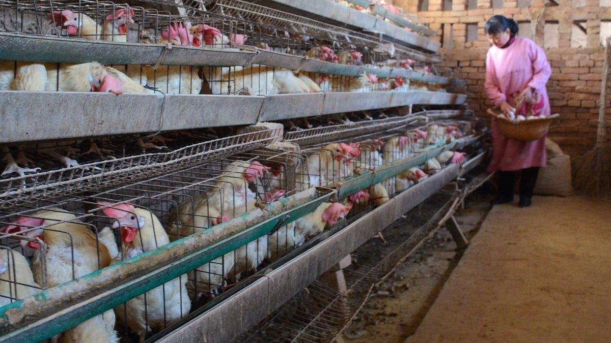 China detecta el primer caso de gripe aviar H10N3 en un humano