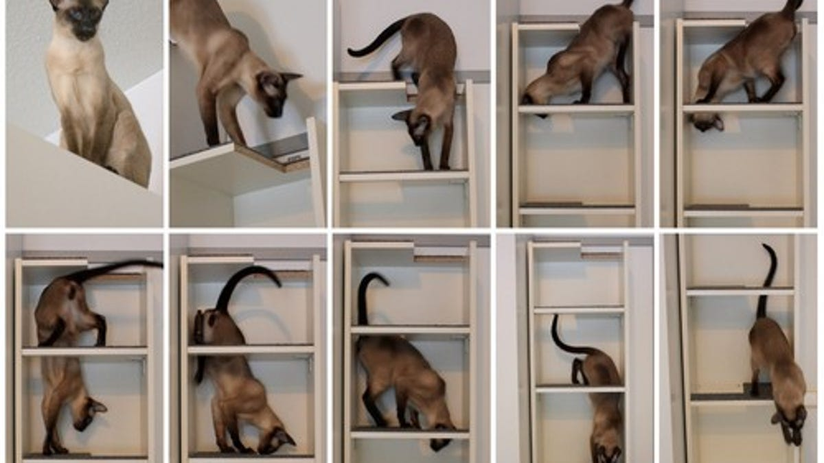 Convert A Cheap Bookcase Into A Small Footprint Cat Tree