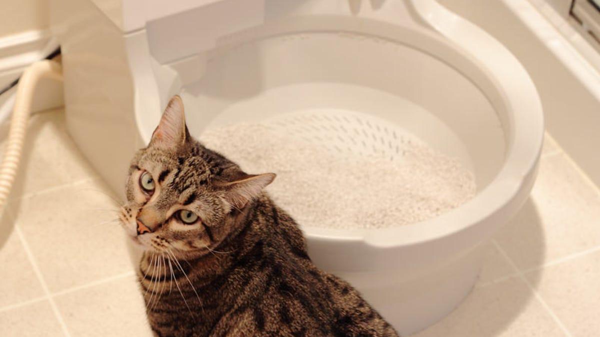 cat genie hookup to sink dojrzały chrześcijański serwis randkowy