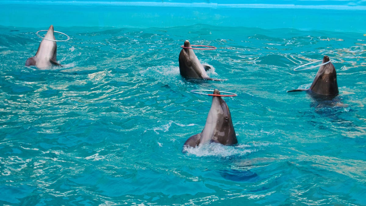 No, India did not just grant dolphins the status of humans