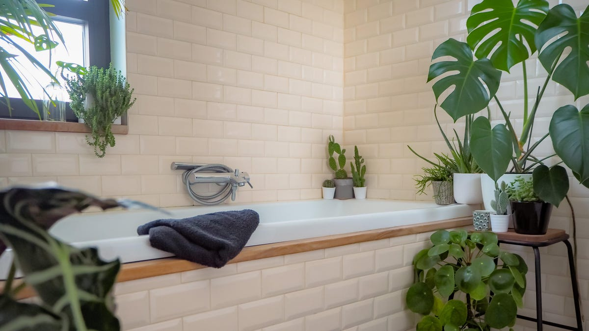 These High Humidity Plants Will Thrive in Your Bathroom