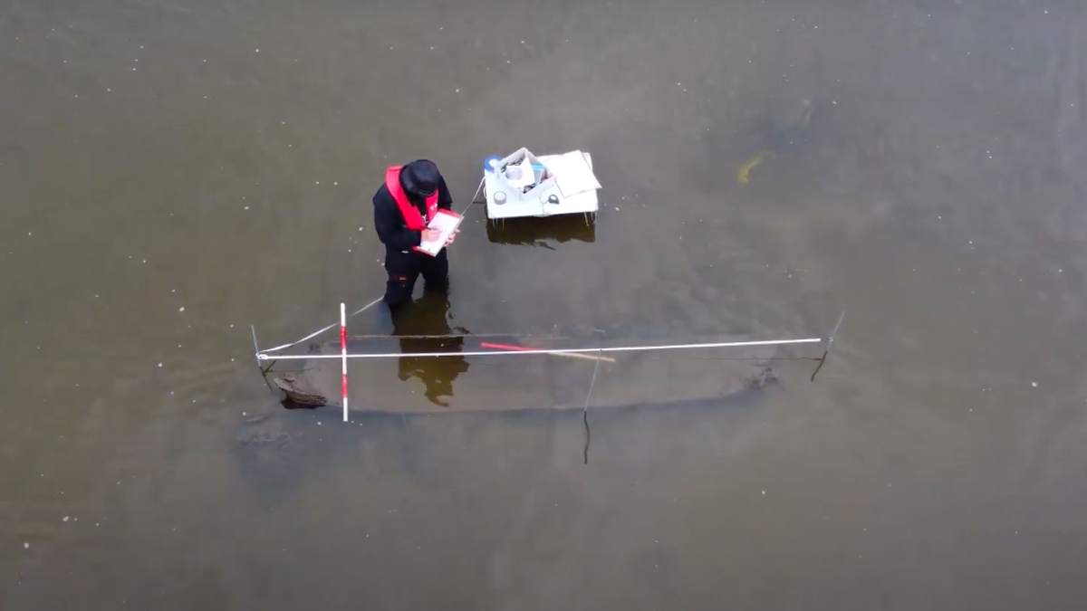 Man Looking for Kevin the Dolphin Accidentally Finds Centuries-Old Logboat