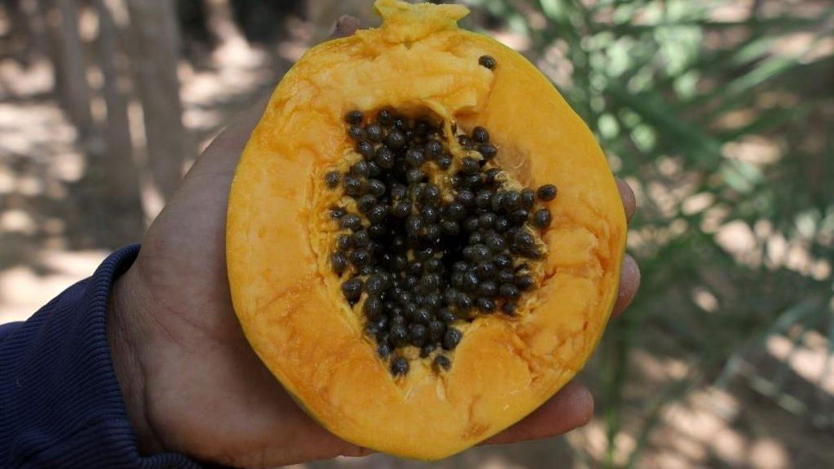 If you eat papaya seeds, can you poop out parasites?