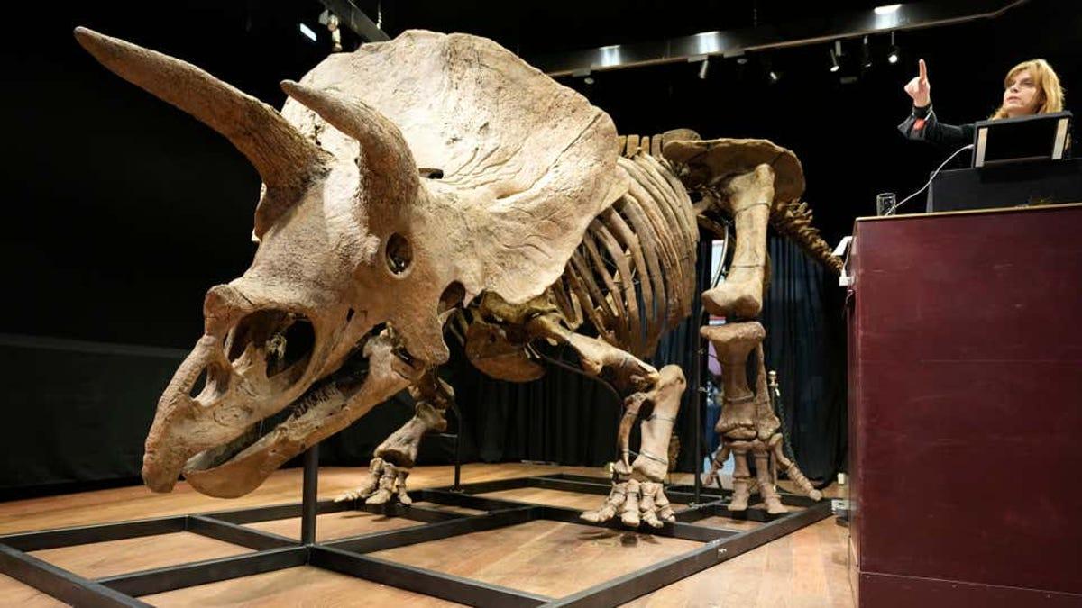El esqueleto del Triceratops más grande se vende por 7,7 millones