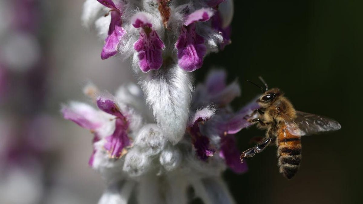 Bees are little caffeine fiends just like us