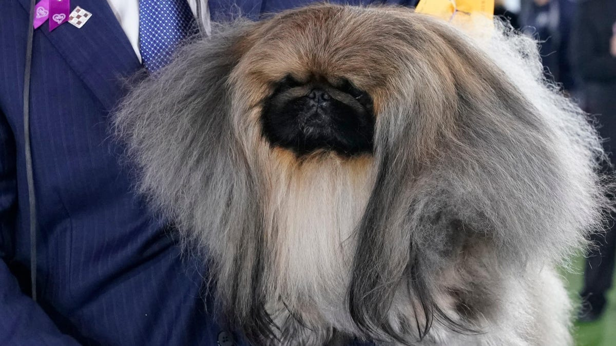 Every Insult We Can Think Of For This Prizewinning Dog