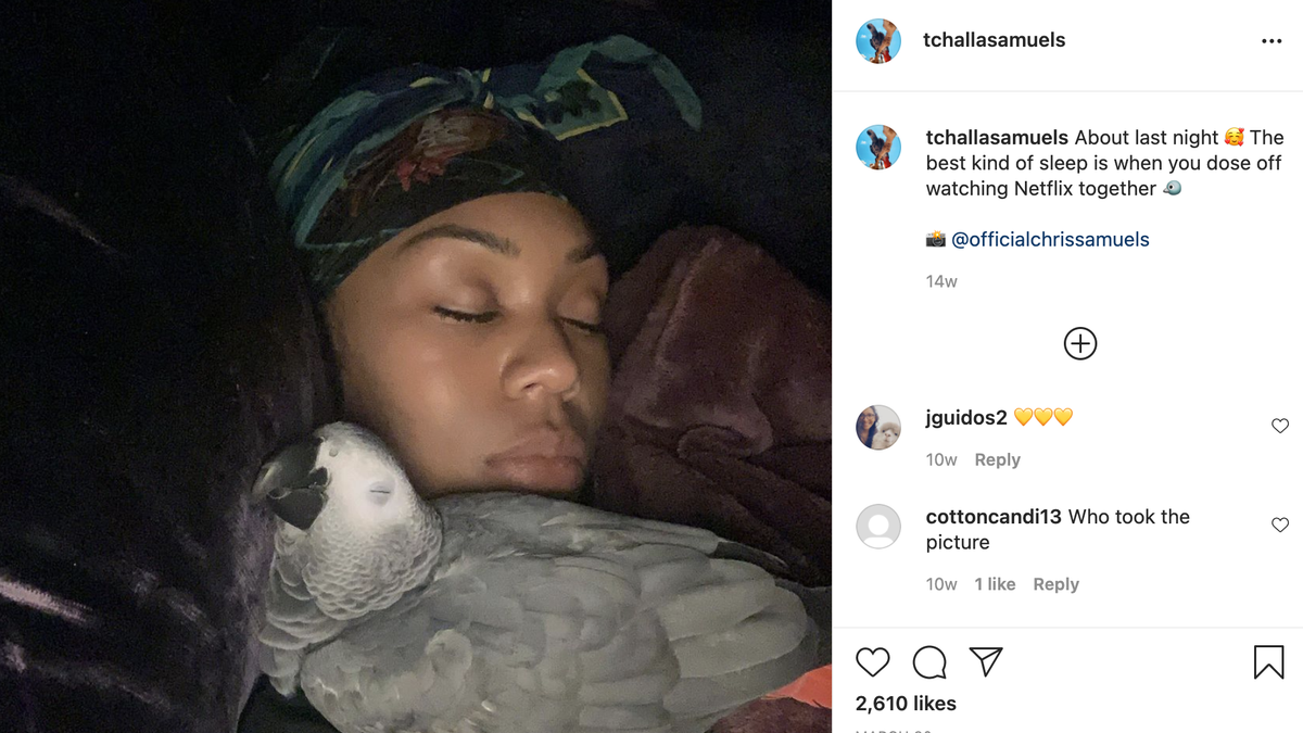 Gone But Not Forgotten: T'Challa, the Parrot From Real Housewives of Potomac