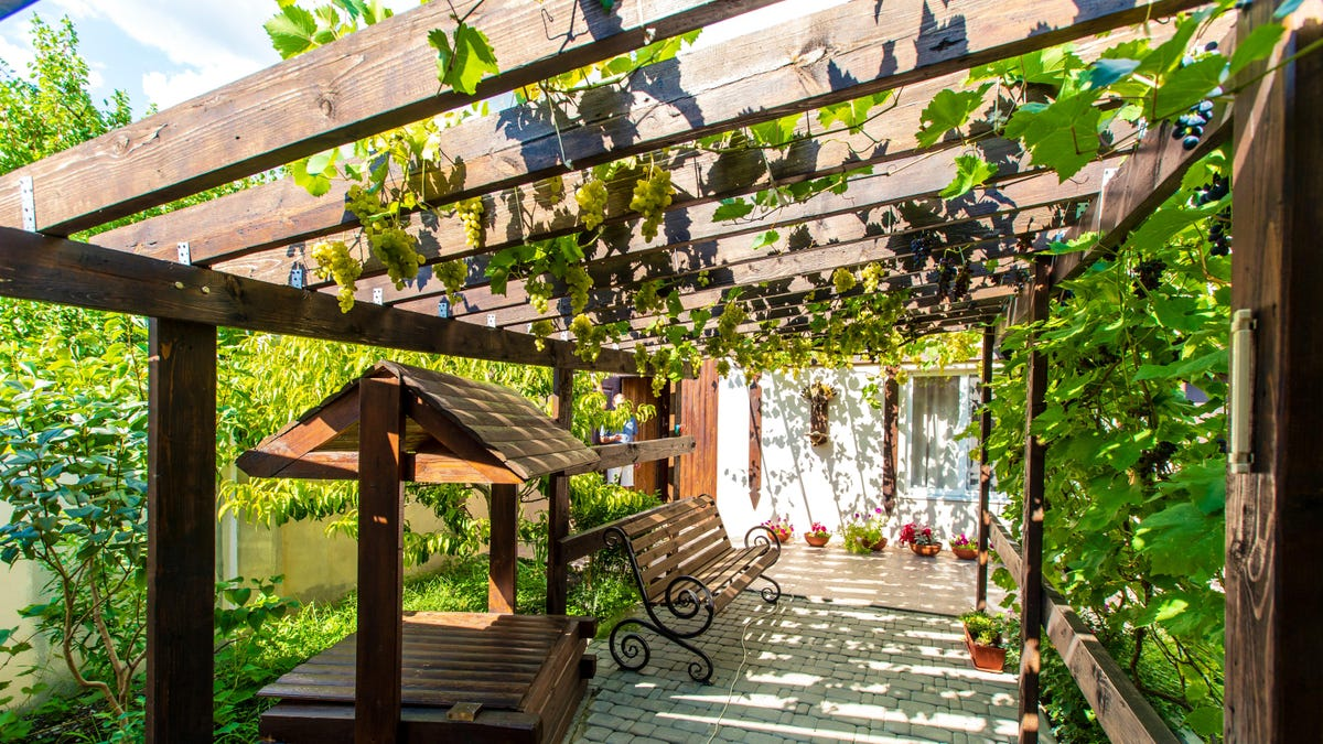 How to Grow Vines on Your Pergola