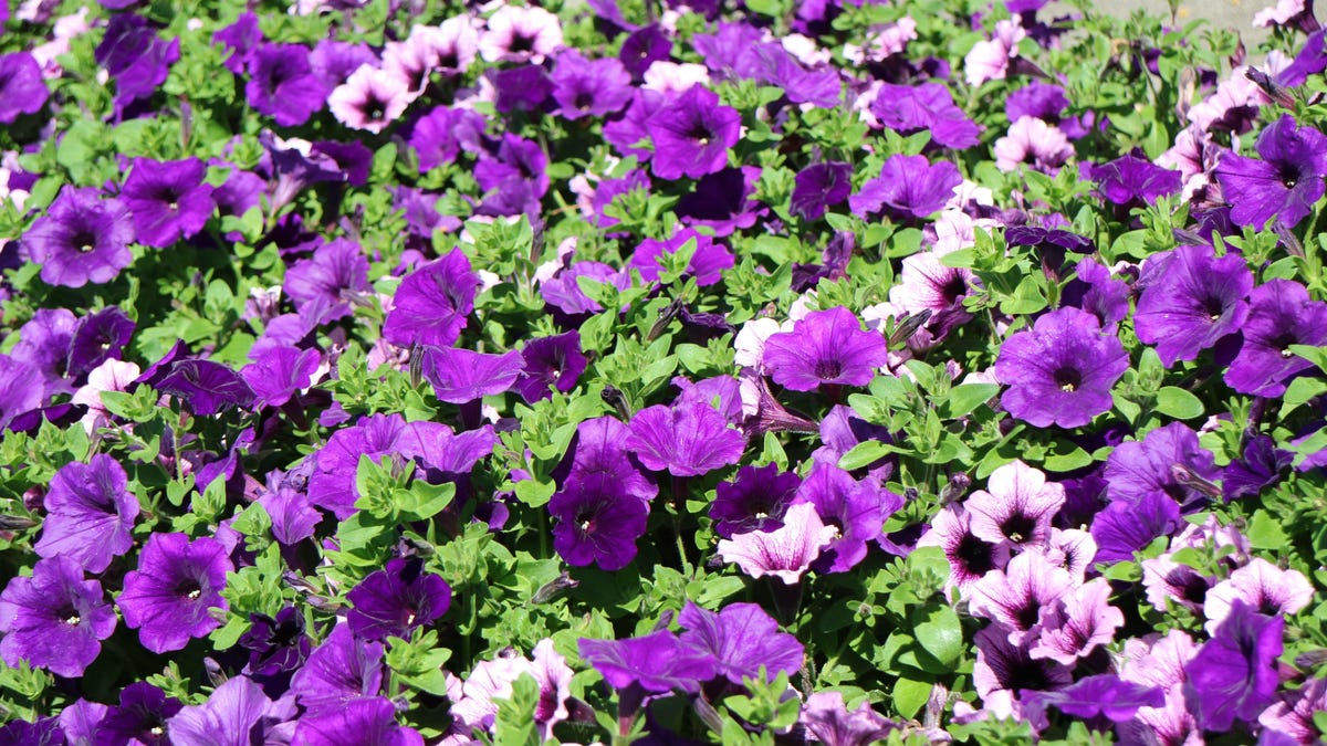 Plant These Flowers That'll Bloom All Summer