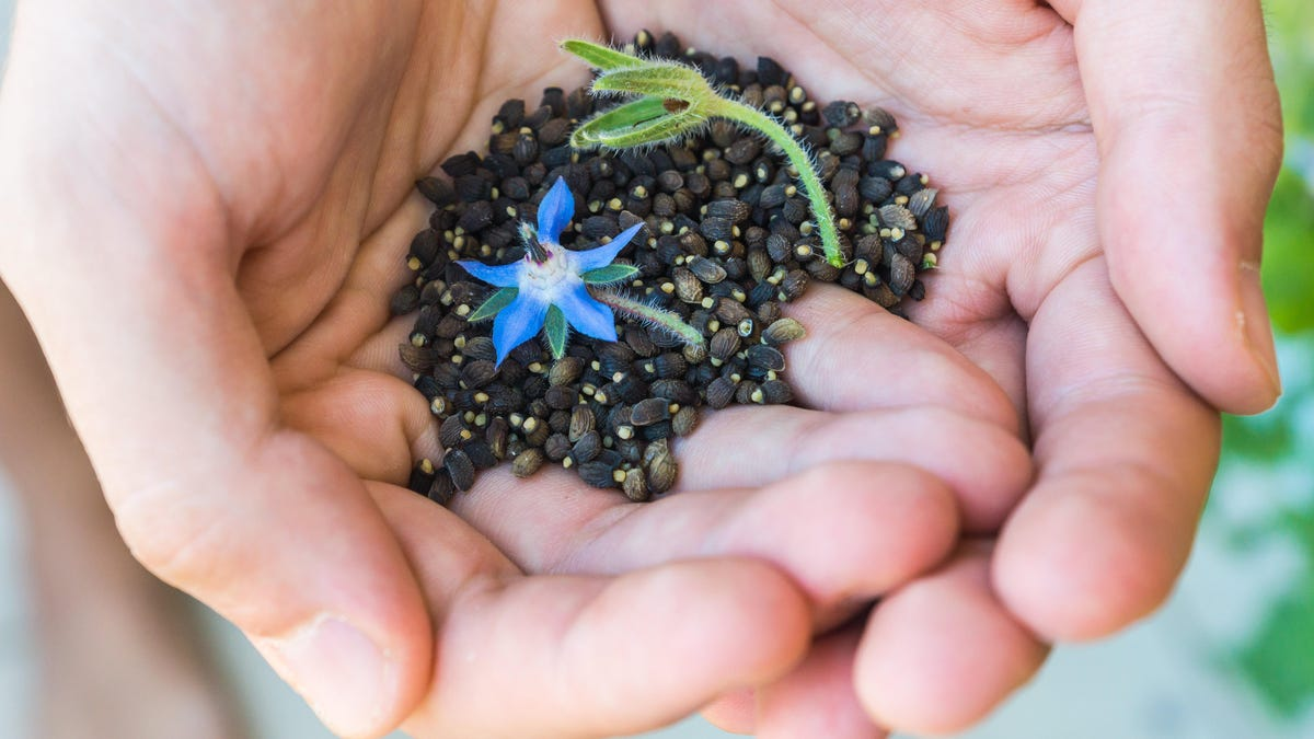 Plant These Quick-Sprouting Seeds If You Want a Garden as Fast as Possible thumbnail
