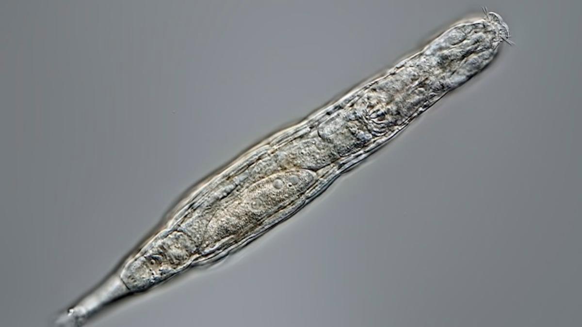 Congelado durante 24.000 años, este animal ha vuelto a la vida