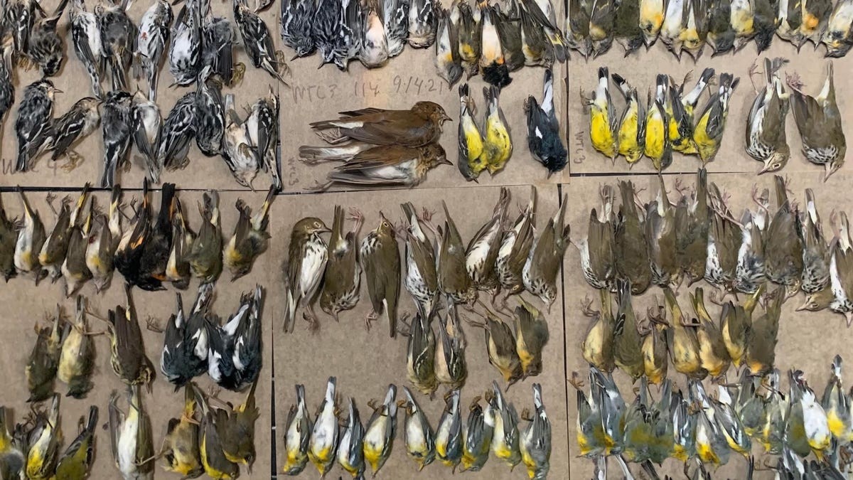 'I Was Just in Shock': Mass Bird Death Reported in New York City