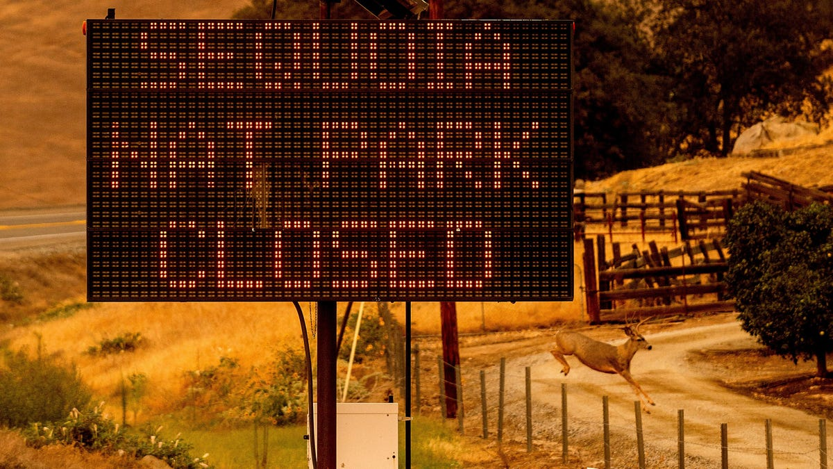Sequoia National Park Closes as Wildfires Threaten Some of the Largest Trees on Earth