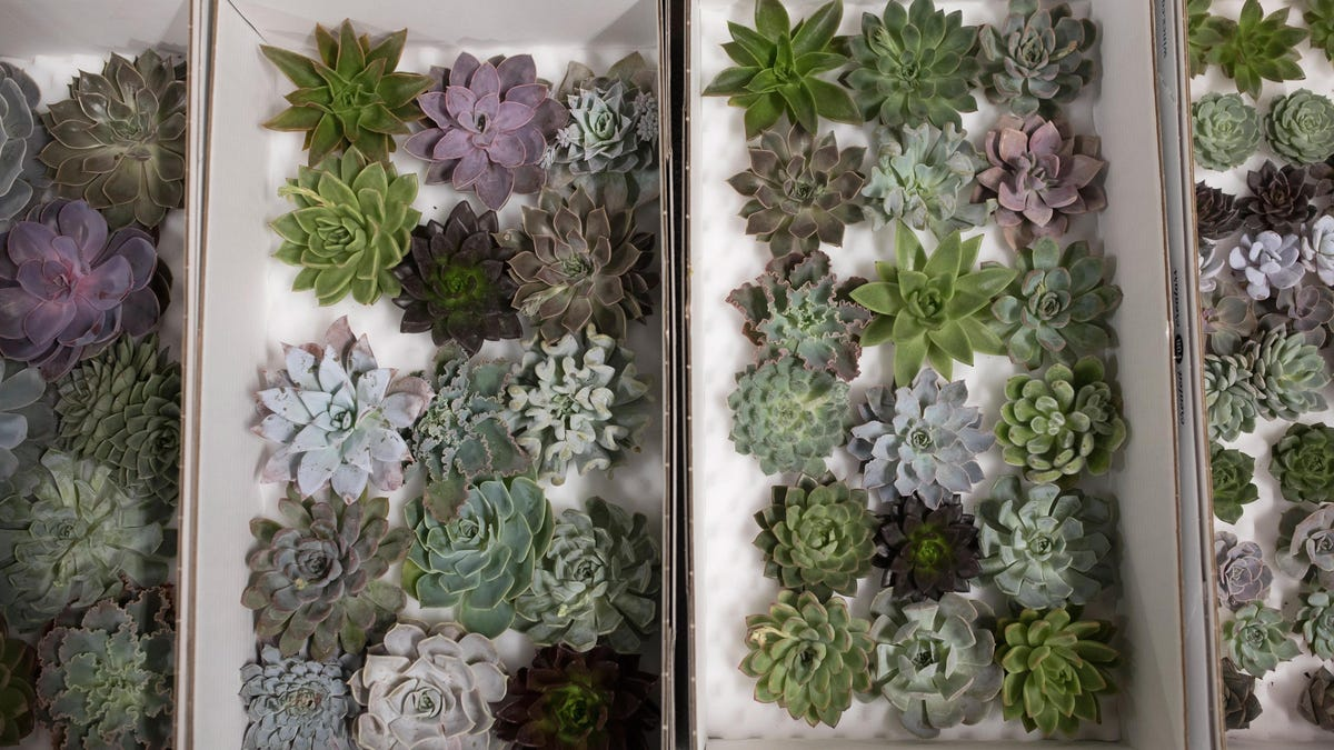 How to Keep a Succulent Alive, Because It's Trickier Than You Think