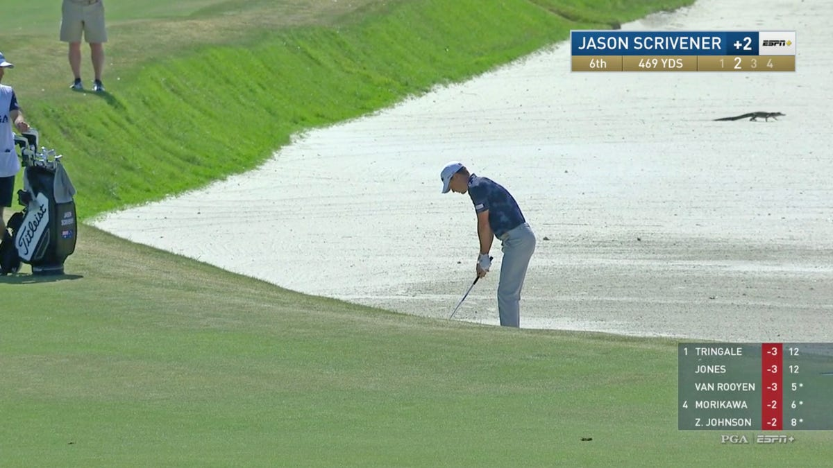 The gators are out at the PGA Championship!