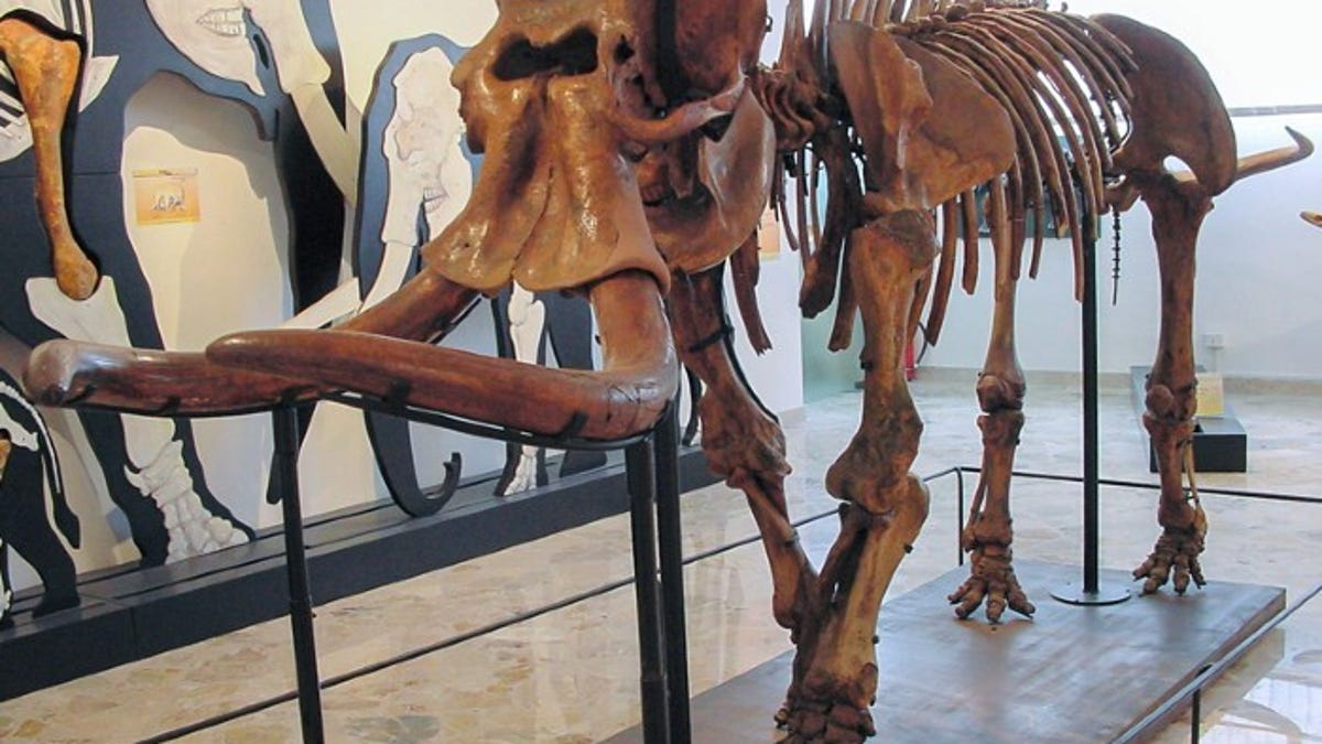 Ancient Elephants Quickly Shrank Into Dwarfs on the Island of Sicily, DNA Suggests
