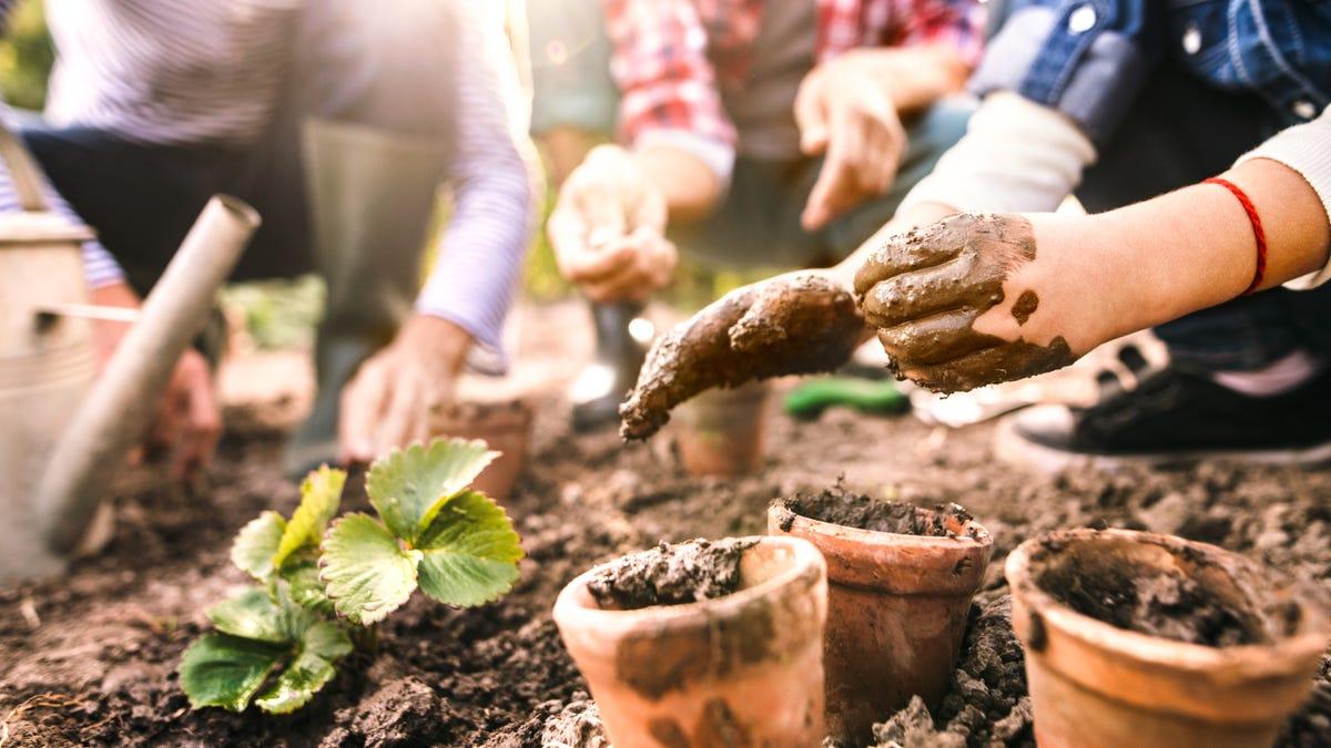 How and When to Plant a Spring Garden
