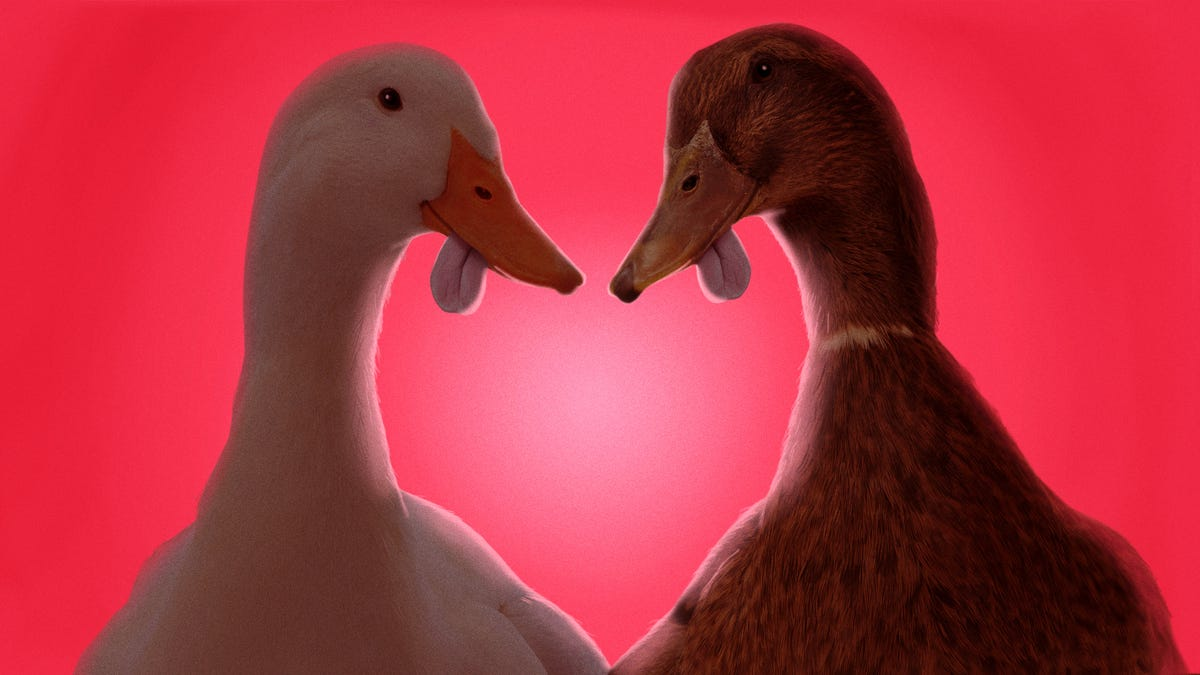 This Valentine's Day, slip someone the (duck) tongue