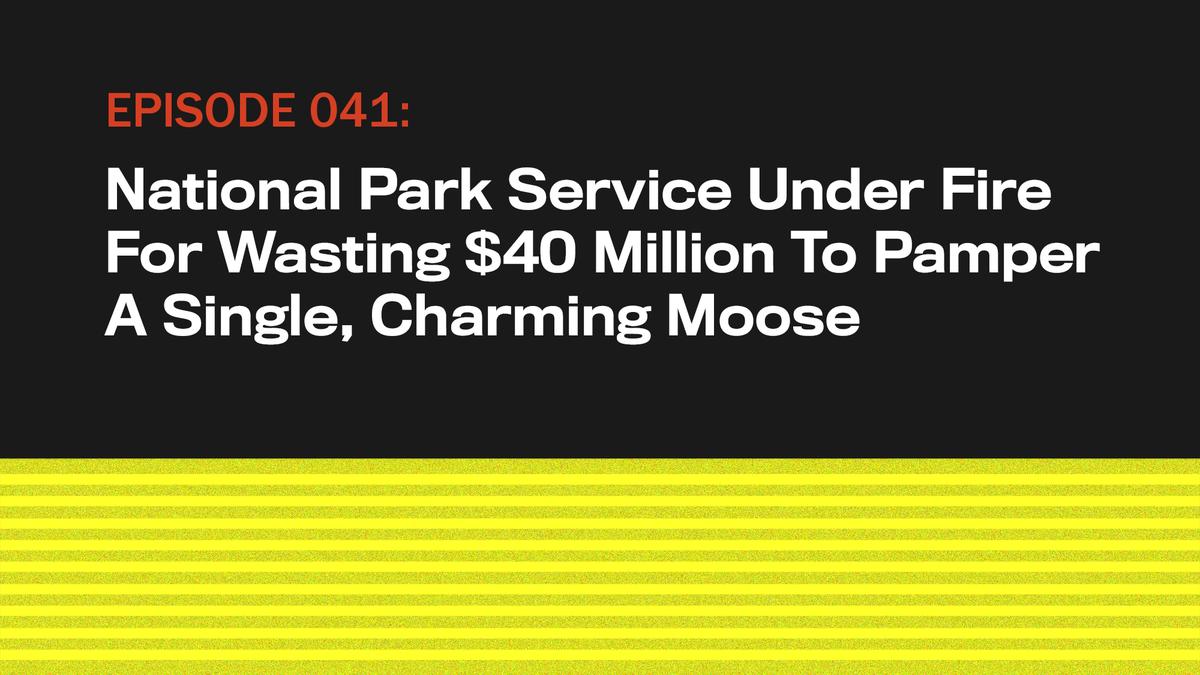 National Park Service Unter Beschuss Zu Verschwenden $40 Millionen Zu Verwöhnen Single, Charmanten Elch