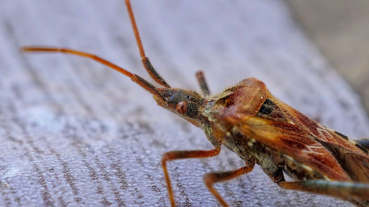 Estudio alerta sobre la catastrófica extinción de insectos