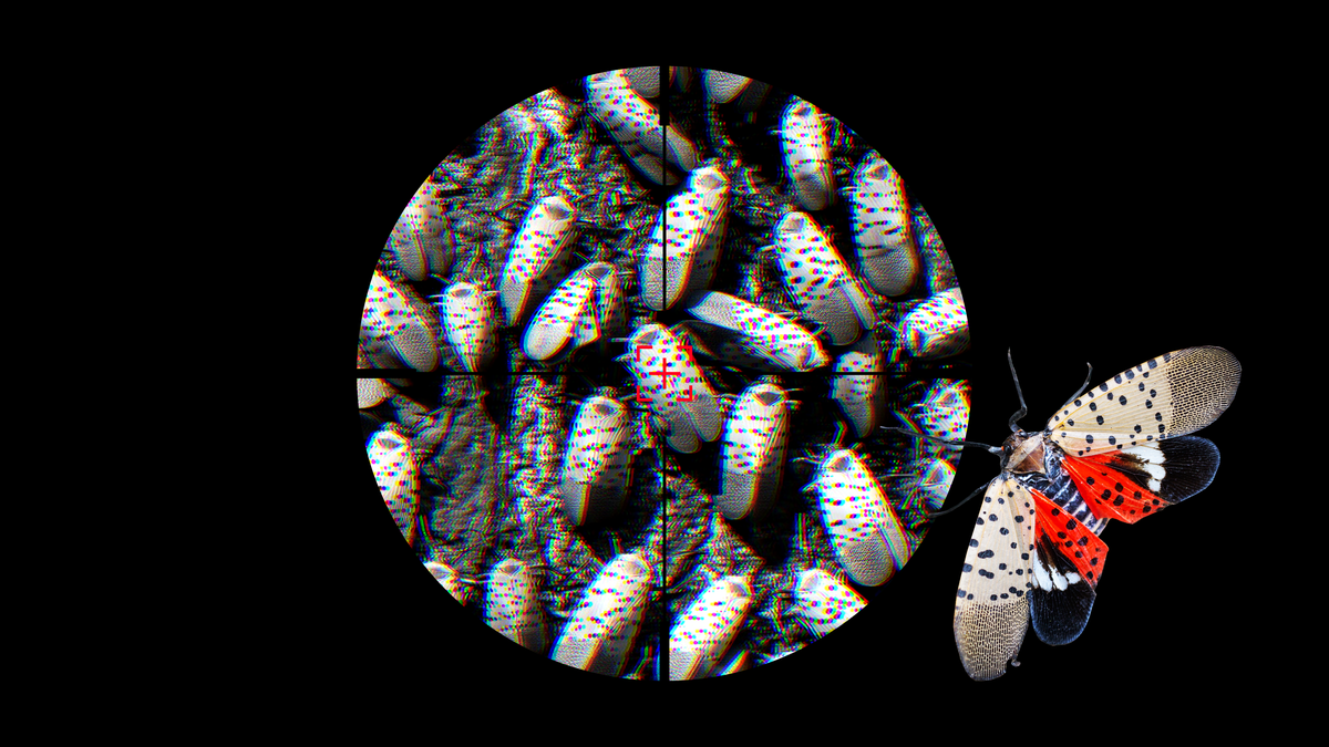 Why You Need to Obliterate the Dreaded Spotted Lanternfly