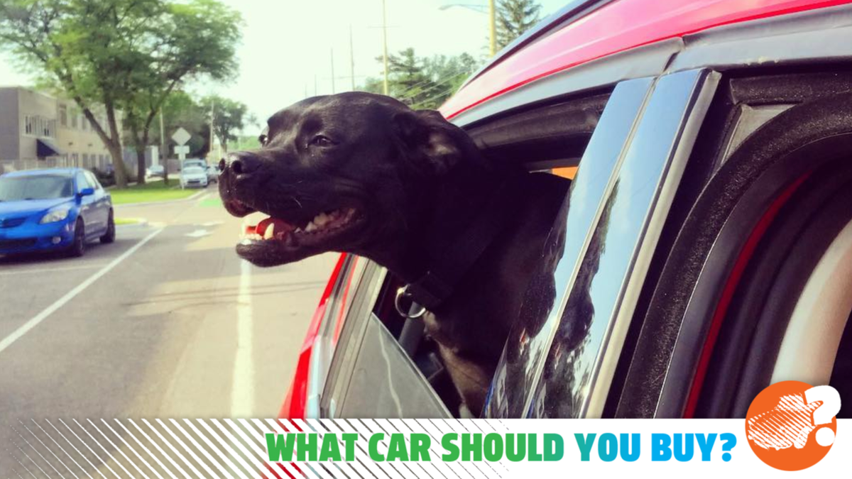 I Need A Cheap Car For My Big Dog And Fun Activities! What Car Should I Buy?
