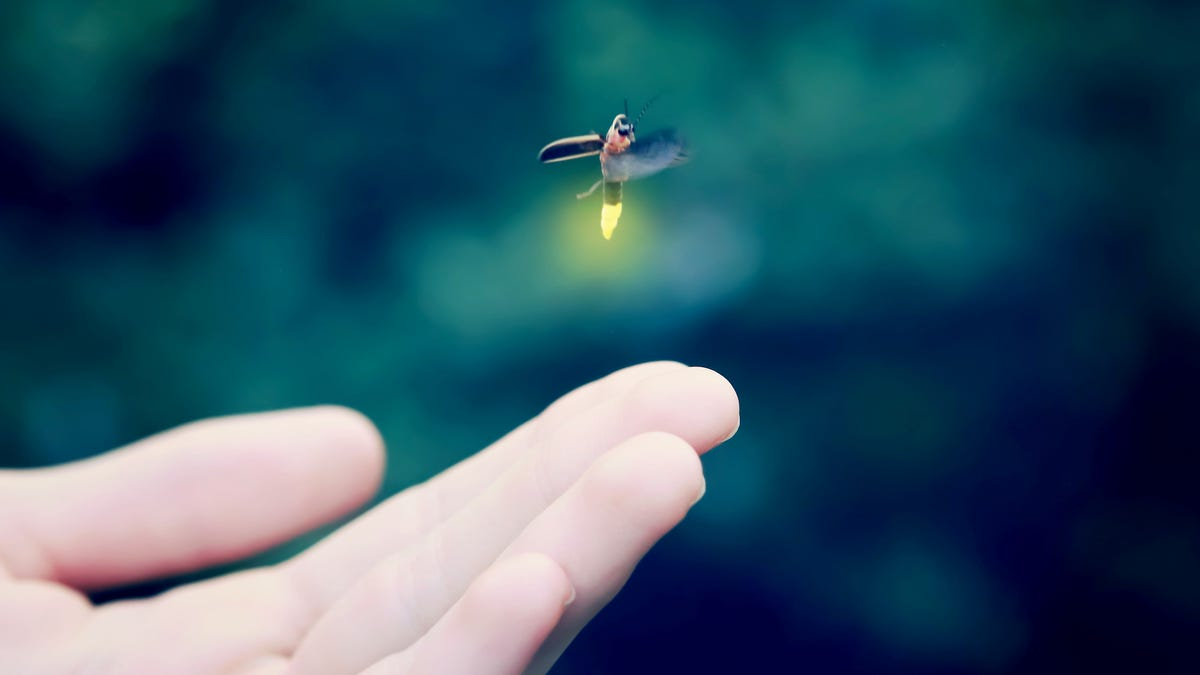 How You Can Help Save the Fireflies