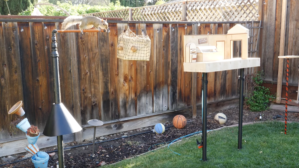 Mad scientist creates intricate squirrel obstacle course