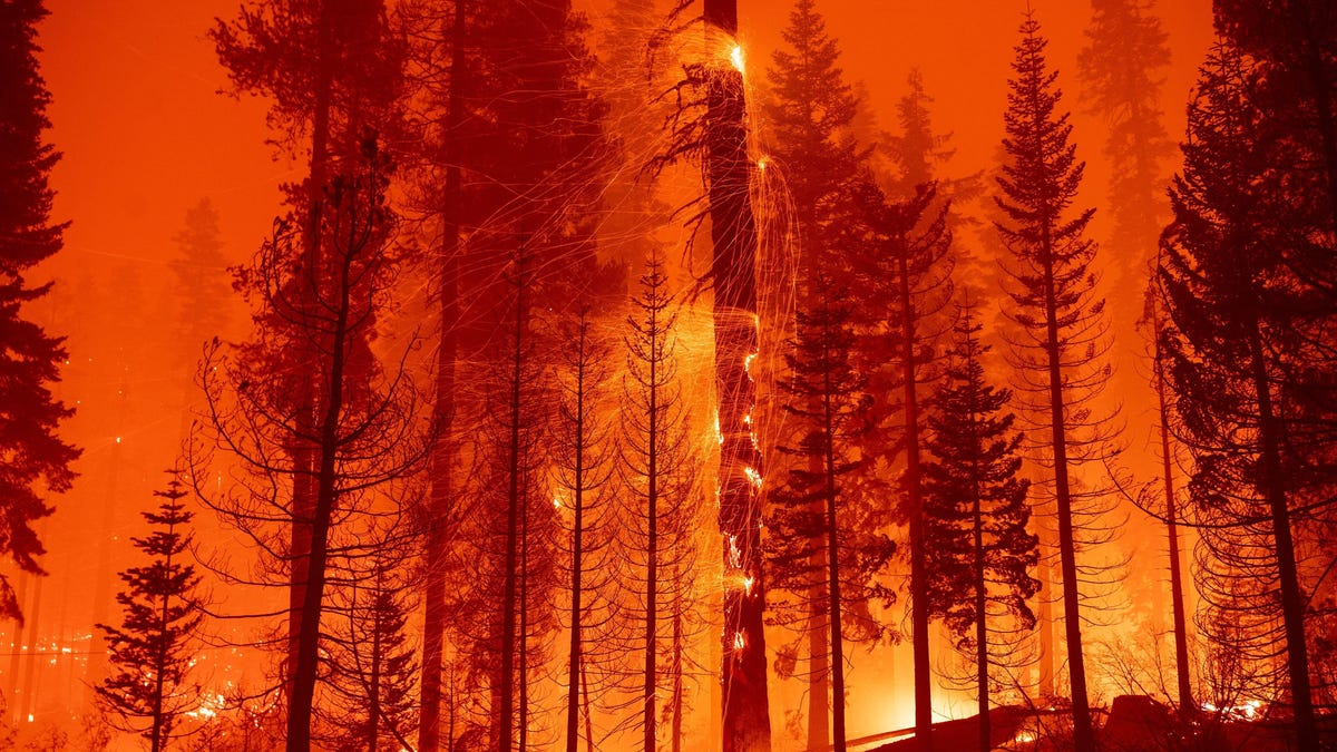 The Caldor Fire Has Taken an Ominous Turn Toward Lake Tahoe