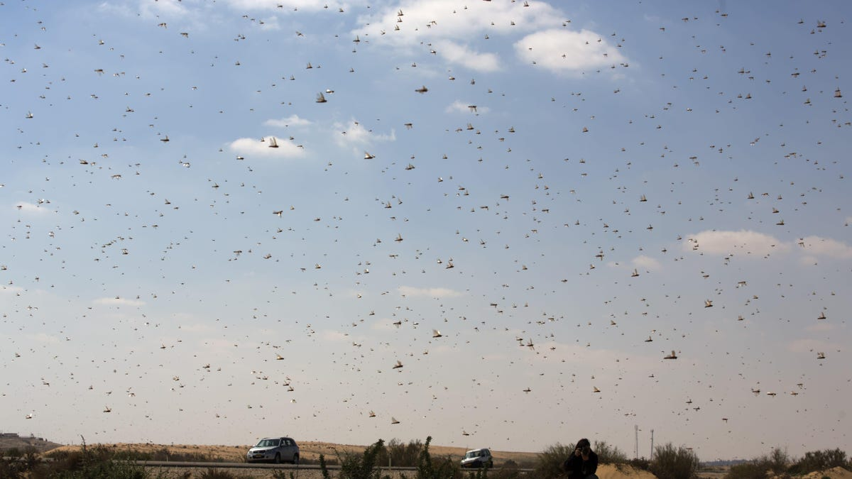 No, China Is Not Sending a Giant Duck Army to Defeat Pakistan's Locusts