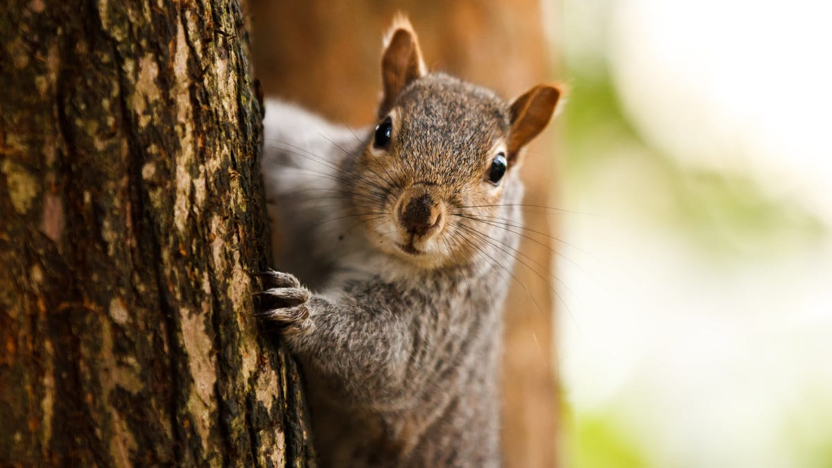 Squirrels Are On The Attack In New York City