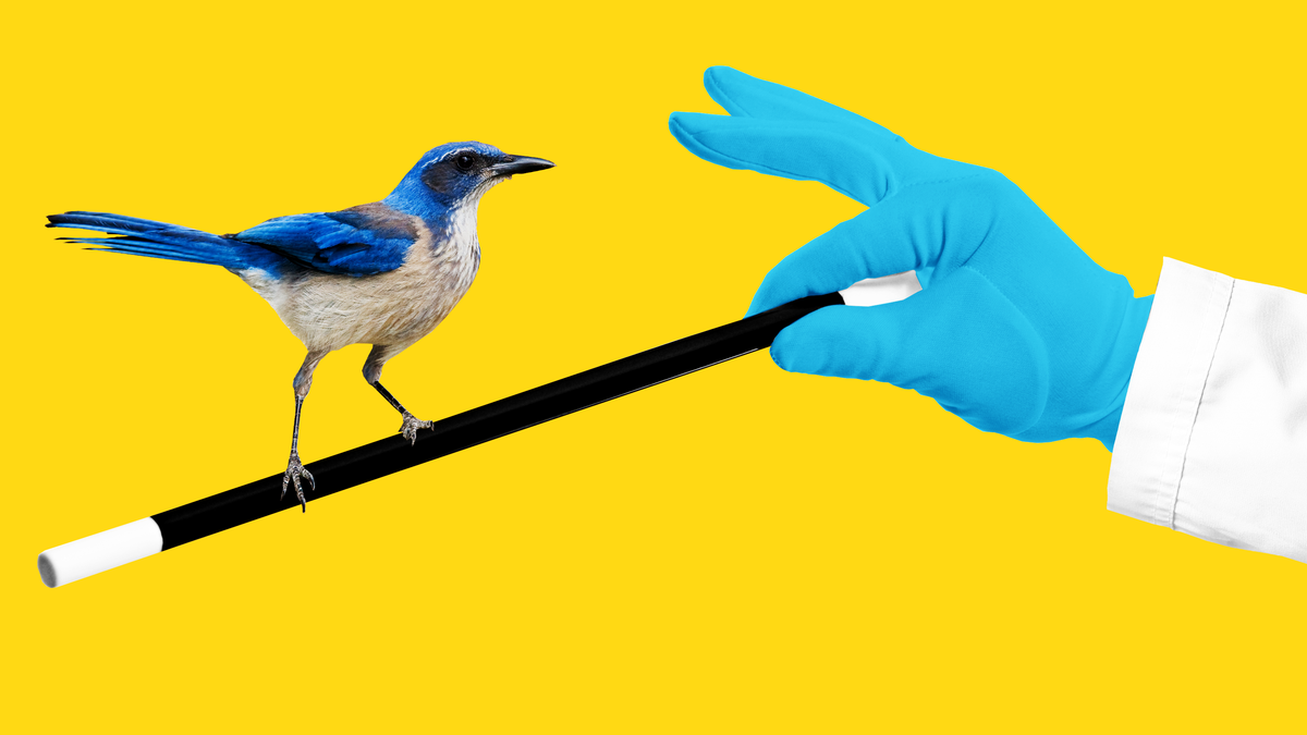 Why Scientists Should Use Magic to Study Animal Intelligence