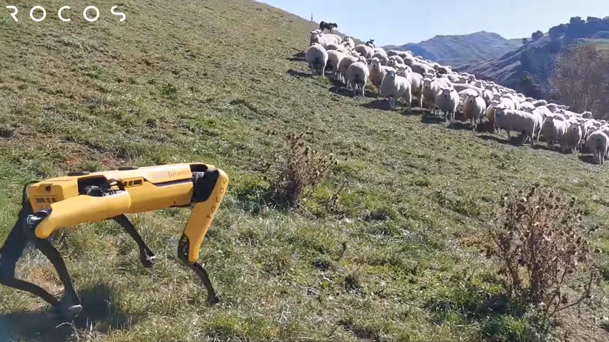 Boston Dynamics' Robodog Roams New Zealand Countryside with a New Purpose: Sheep Herding