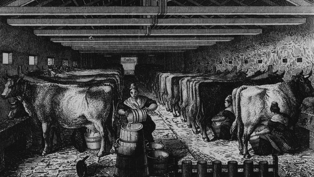 Food shortages sparked the Great Cheese Riot of 1766