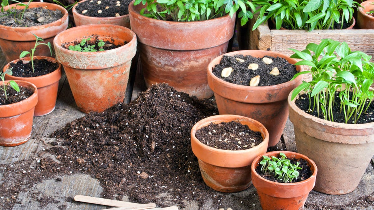 You Should Save and Store Seeds From Your Garden