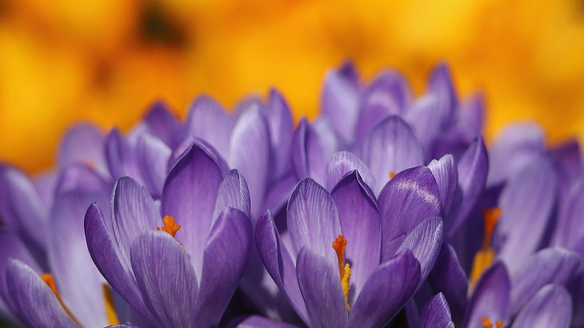 The Difference Between Annuals, Perennials, and Biennials