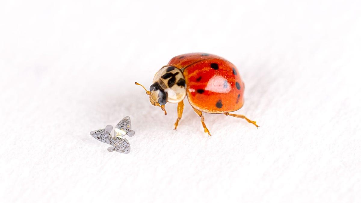 Das kleinste von Menschenhand geschaffene Flugobjekt aller Zeiten