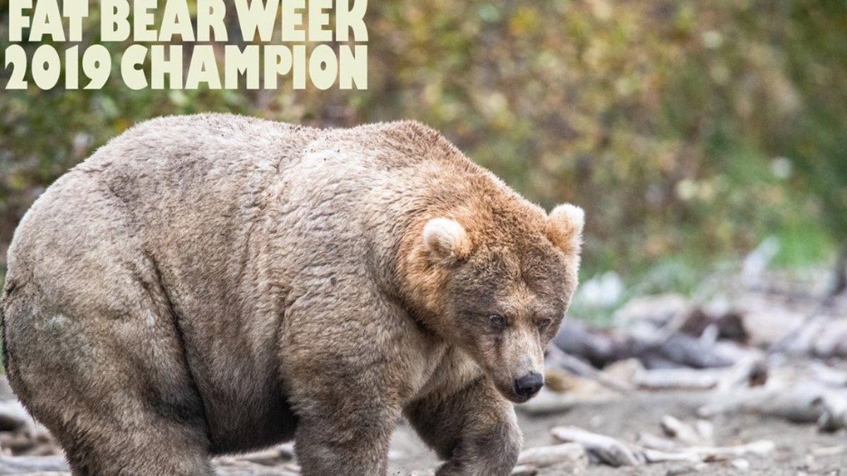 Saturday Night Social: Congratulations to Holly, the Chonkiest Bear in All the Land