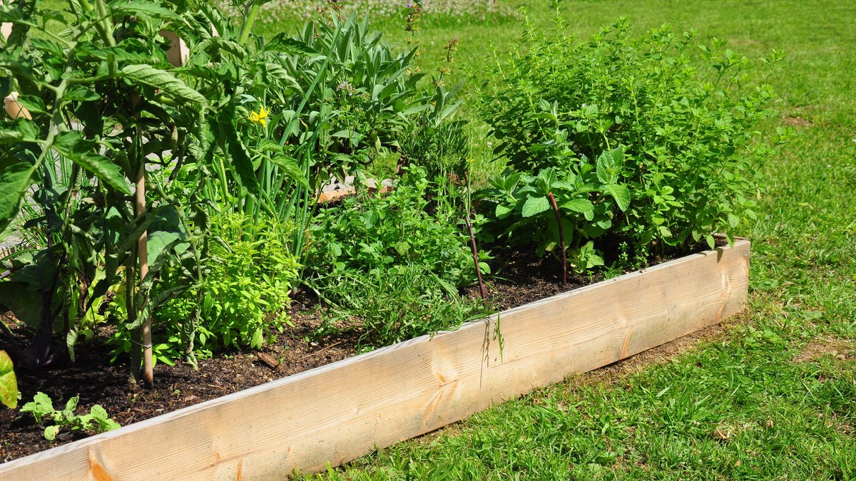 Why Raised Garden Beds Aren't All They're Cracked Up to Be