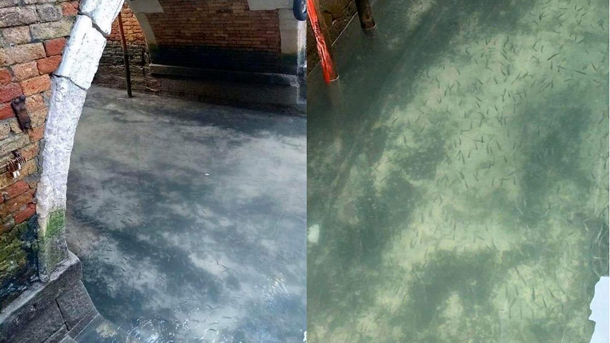 Peces y aves han vuelto a los canales de Venecia tras la cuarentena impuesta por el Coronavirus