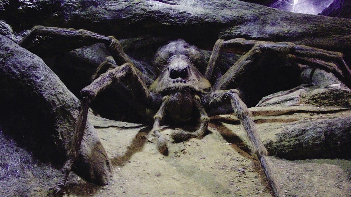 Científicos encuentran una araña que se parece a Aragog, la ...