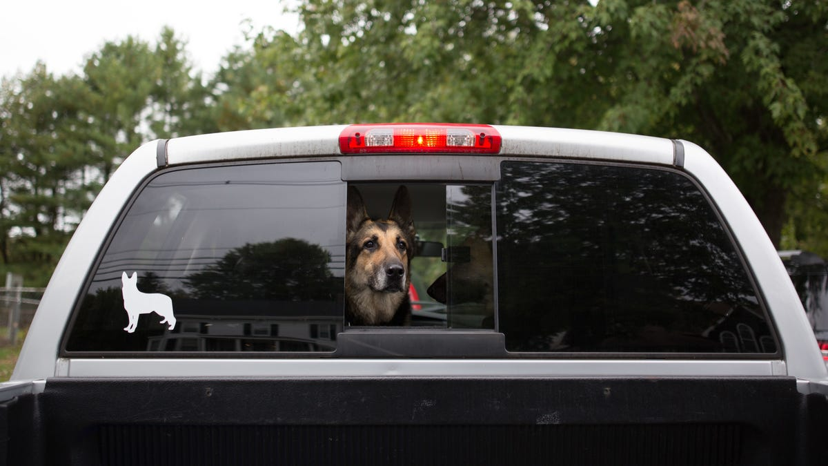 Uber's Making It Easier to Bring Your Pet for the Ride—and Don't You Dare Ruin This for Me