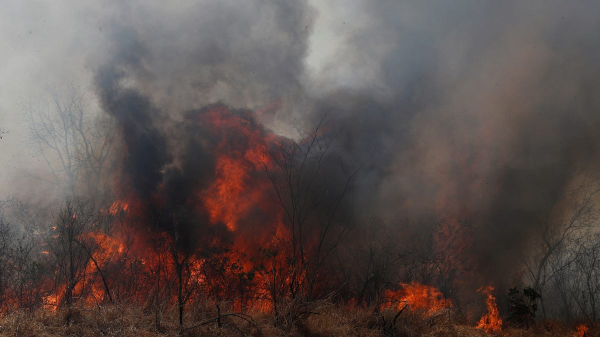 Bolivia's Forest Fires Have Left More Than 2 Million Animals Dead