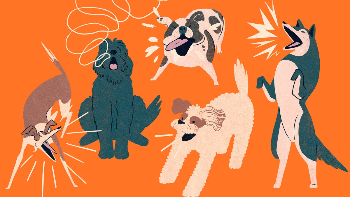 How to Get Your Neighbor's Dog to Stop Barking Incessantly