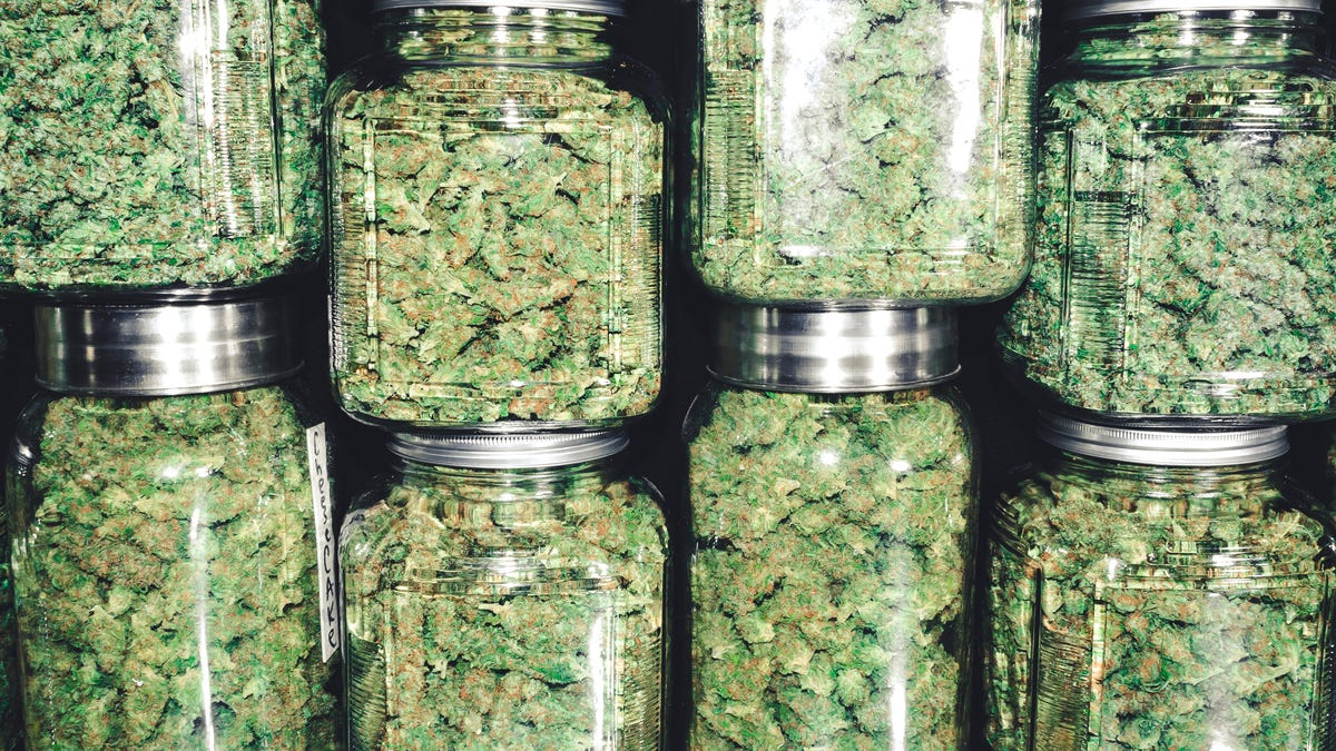 The Ultimate Guide to Choosing the Type of Weed That's Right for You