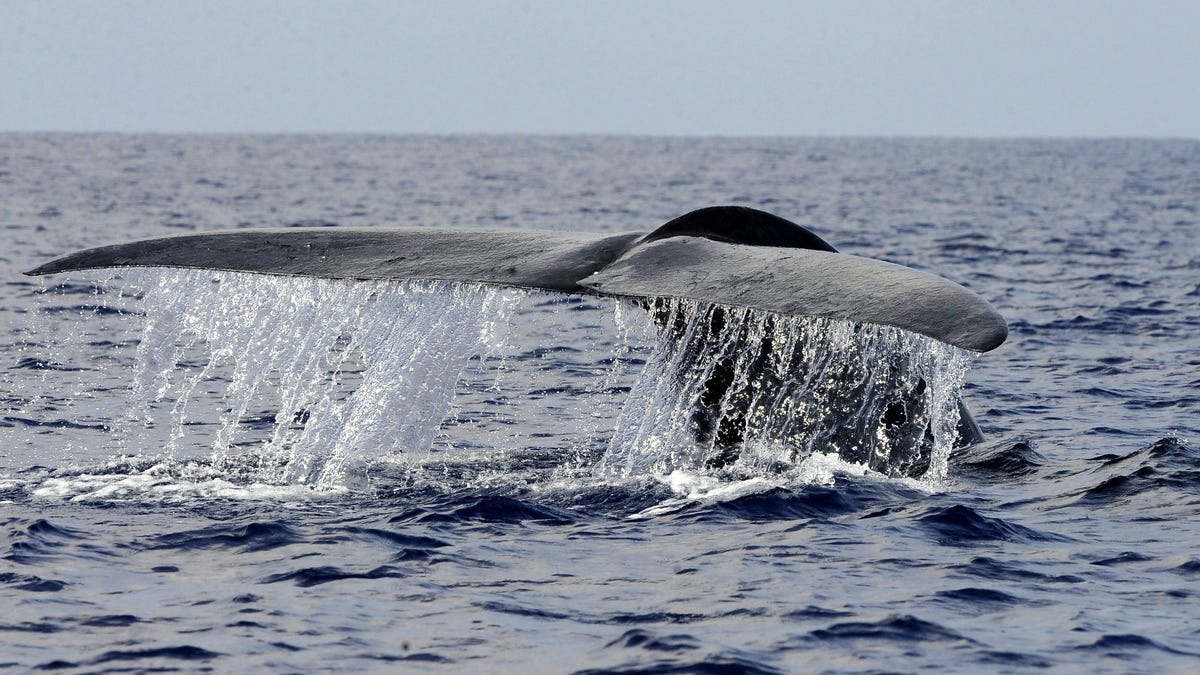 New Blue Whale Population Discovered After Scientists Hear Unknown Song